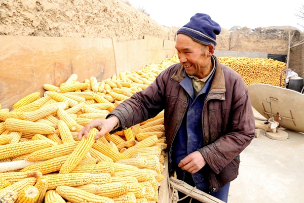 甘肃定西:42万亩全膜玉米喜获丰收