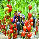【产业发展】甘肃5年安排贷款1000亿支持特色产业