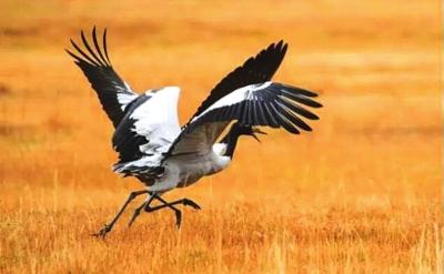 甘肃肃南生态好转 野生动物频繁出现
