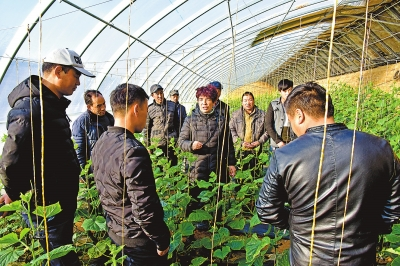 大棚里的智慧农业——白银市靖远县东湾镇三合村见闻