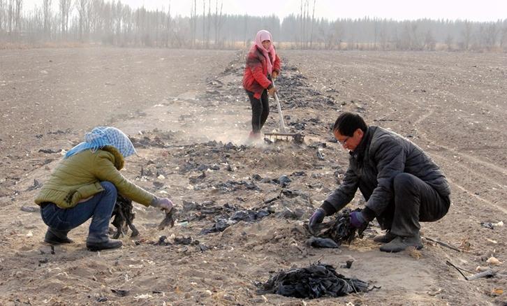 甘肃高台:废旧地膜清理改善乡村环境