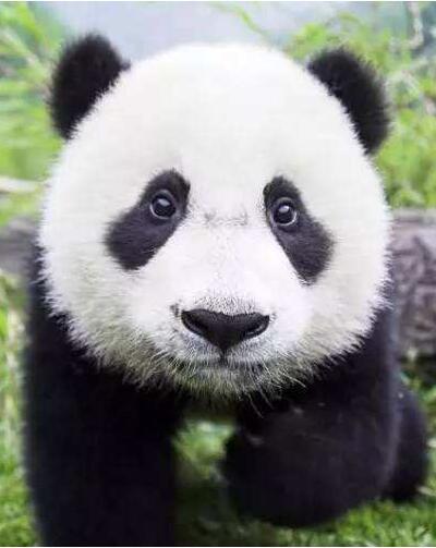 《大熊猫国家公园白水江片区总体规划》通过评审