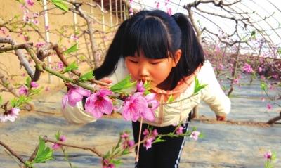 白银市白银区现代农业科技示范园桃花盛开
