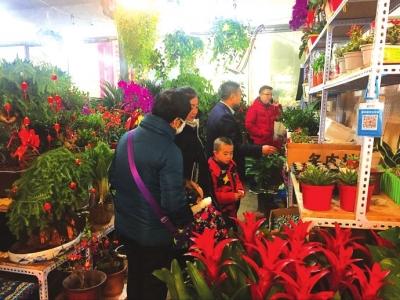 兰州:花卉市场节后价低销量好