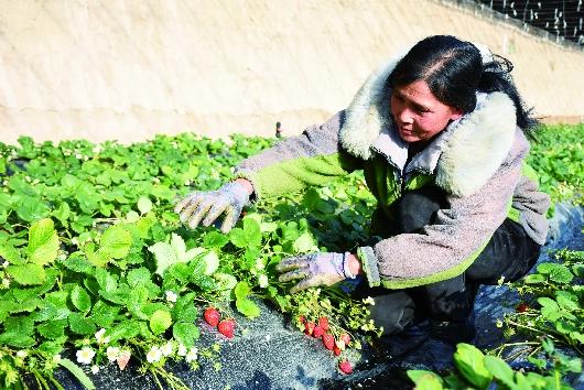 戈壁农业成酒泉肃州区现代农业新名片(图)
