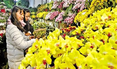 新春佳节期间 兰州各类花卉热销