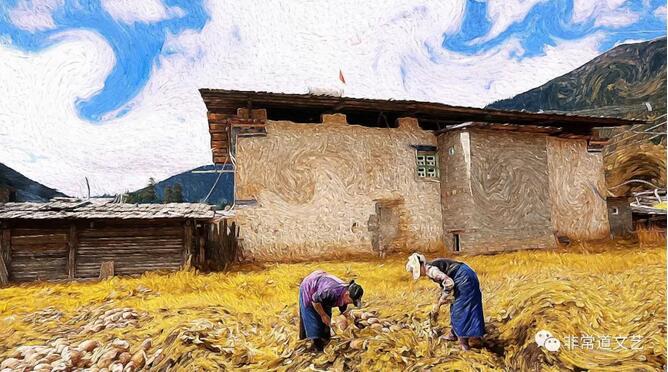 小麦花的盛典