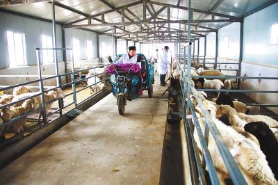 """庆阳市宁县探索""""合作社+农户+市场""""模式 增加了农民收入"""