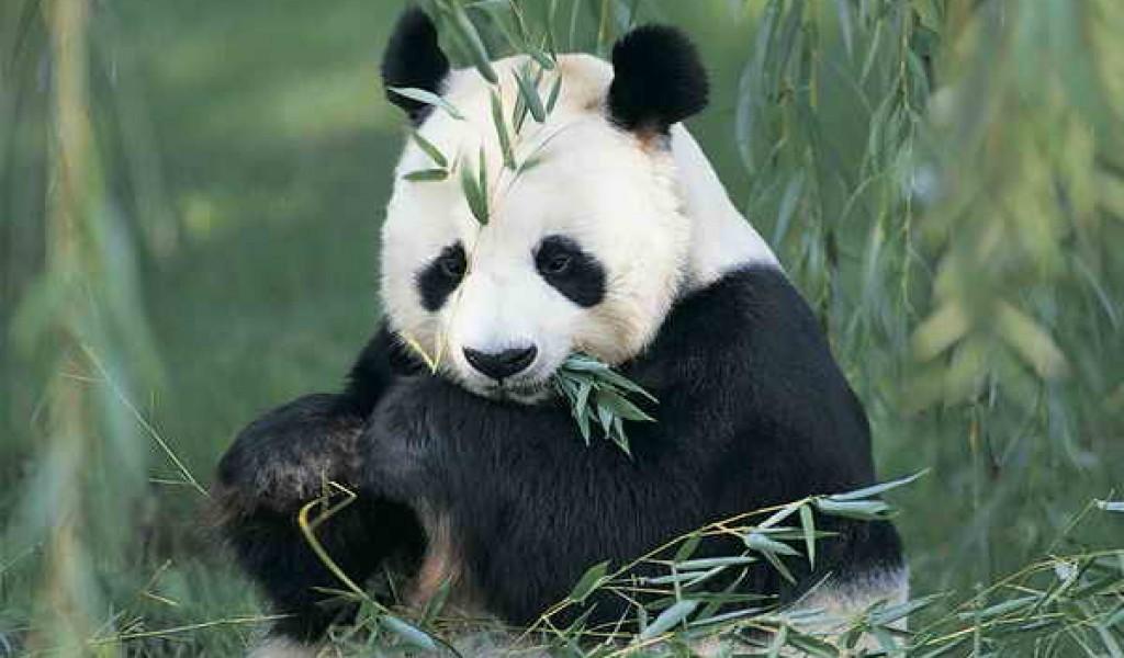 四川投资16990万建设大熊猫国家公园相关项目