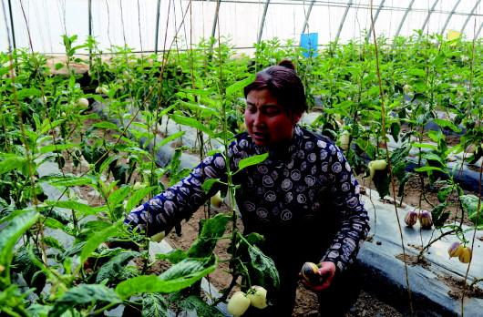 酒泉肃州区优化产业布局 带动农民增收致富(图)