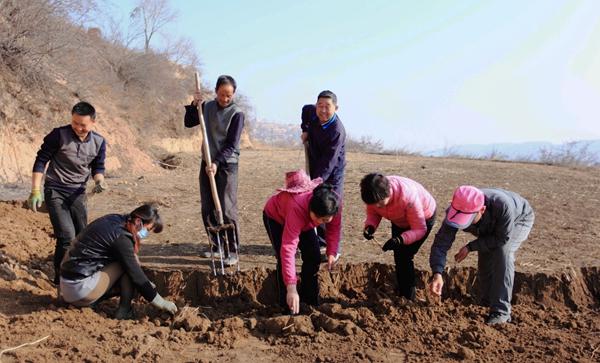 陇西县:人勤春来早 药农采挖忙