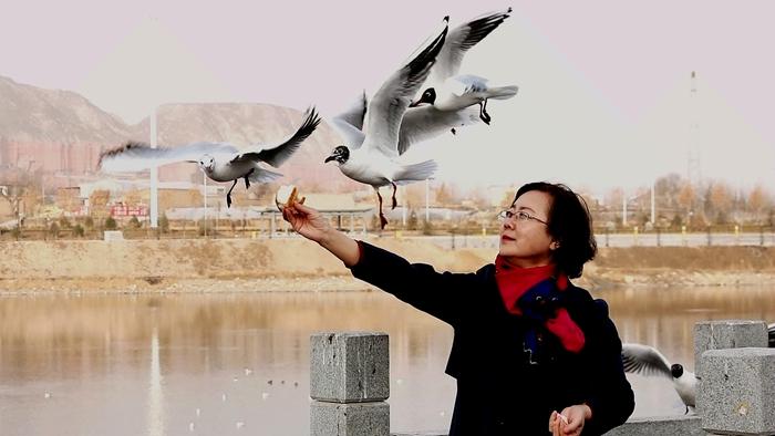 临夏永靖:人鸟和谐成靓景