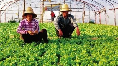 兰州皋兰什川镇上下泥湾村大力发展设施农业走上致富路(图)