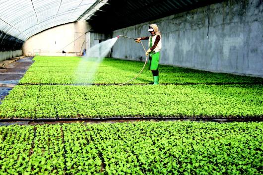 酒泉金塔县加快种植结构调整 引导群众发展附加值高的经济作物(图)