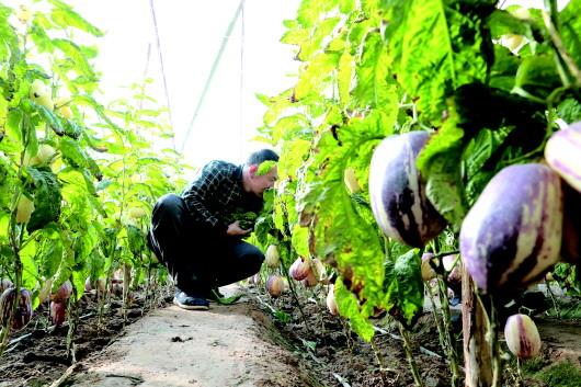 酒泉敦煌:紧盯优势发展现代农业(图)
