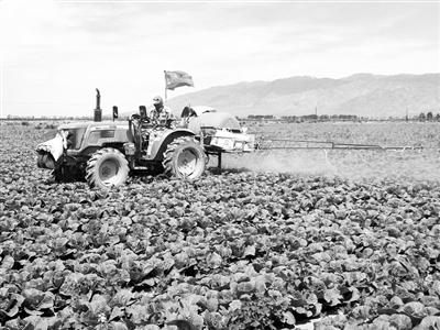 """""""我们不是农民工,是农业工人!""""——一位金昌永昌县农民在土地流转之后的别样生活"""