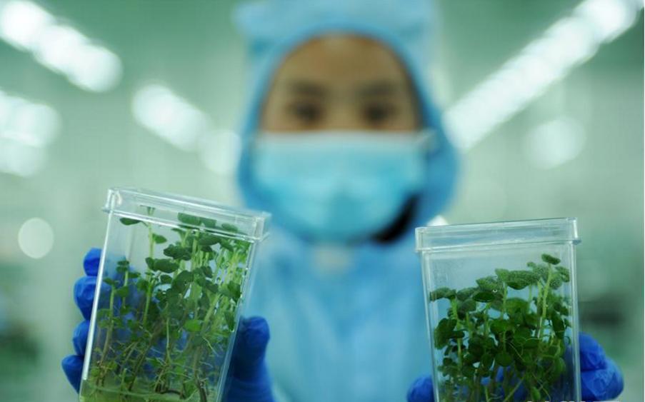 贵州:产业结构调整助力乡村振兴