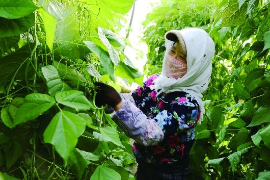 酒泉肃州区戈壁农业