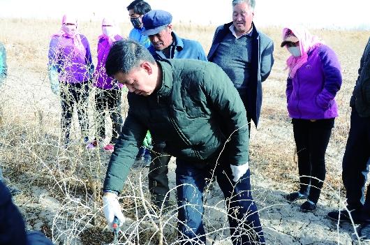 酒泉瓜州县沙河乡邀请专家对全乡枸杞种植户开展实地培训(图)
