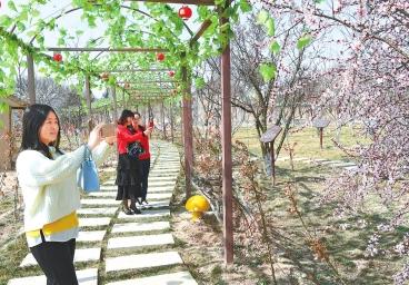 游客在平凉泾川县凤凰村踏青赏花