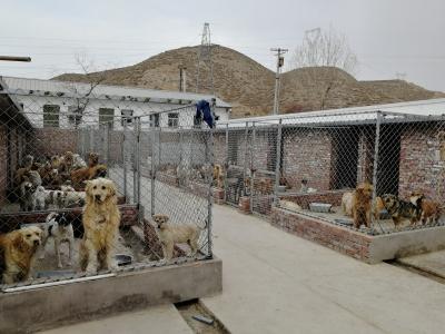 """【记者关注】救助城市流浪狗给它们一个温暖的""""家""""(图)"""