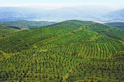 绿水青山就是金山银山——定西市林业生态建设综述