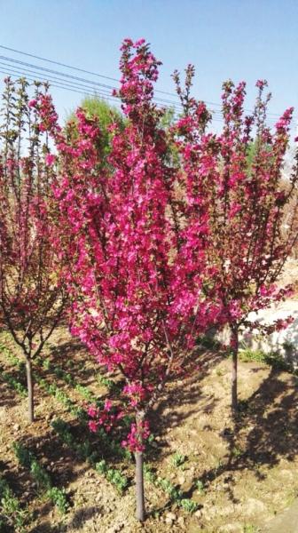 兰州市将陆续引进名贵花木为城市景观添色