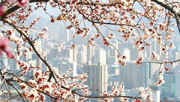 小陇|春风吹绿黄河岸 金城赏花好时节(组图)