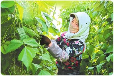 酒泉肃州区戈壁农业发展侧记