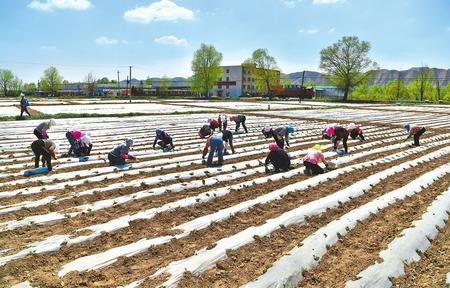 兰州市永登县大同镇农户抢抓农时 种植高原夏菜