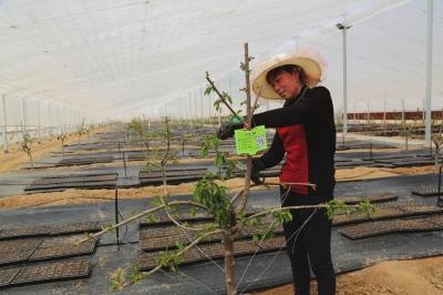 依托现代农业走上致富之路 兰州新区全力打造田园综合示范园