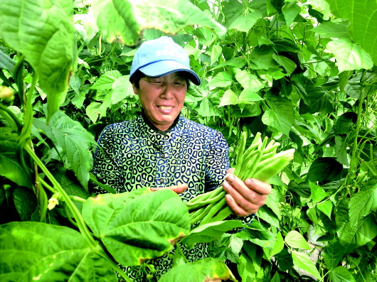 """酒泉肃州区:把广阔的戈壁滩打造成群众的""""菜园子""""(图)"""