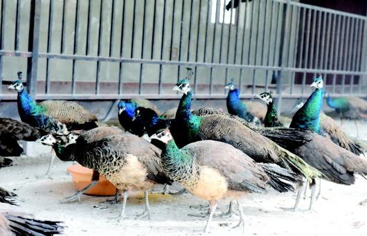 """酒泉肃北县戈壁现代牧农业示范园区住进许多""""新成员""""(图)"""