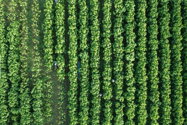依托优良生态环境 推动蚕桑产业转型