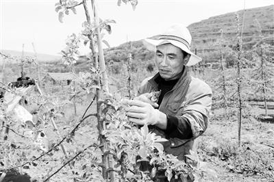 """天水秦安:""""三变""""改革盘活资源助农民增收(图)"""