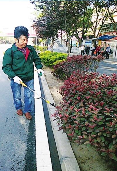 兰州市城关区集中防治夏季苗木病虫害 确保花草树木健康生长(图)