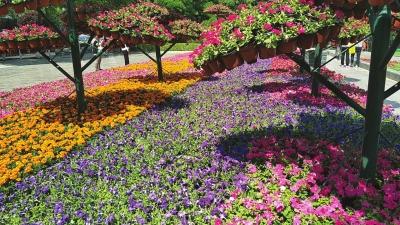 """修剪树木摆放盆花打扫积尘 兰州市积极为""""兰马""""减色添彩(图)"""