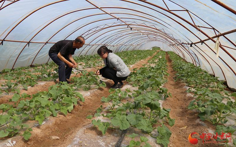庆阳宁县:特征高效农业助民增收