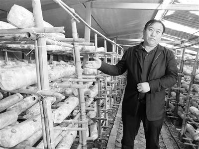 武威天祝县生态移民种植藜麦走出产业扶贫新路子