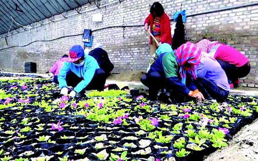 酒泉阿克塞哈萨克族自治县园林绿化站培育花卉15万株(图)