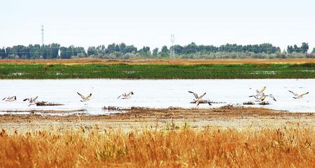 :【生态文明 美丽甘肃】北海子,一片正在苏醒的湿地