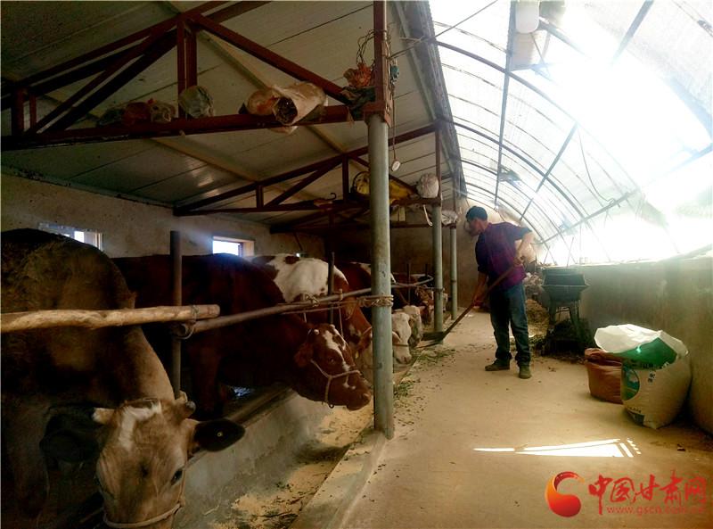 定西崆峒区肉牛养殖助力农户脱贫增收(图)