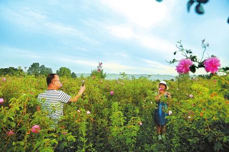 陇南徽县打造观光农业 带动农民脱贫增收(图)