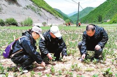 """定西市岷县推进""""5·16""""雹洪灾害受灾地区复耕工作"""