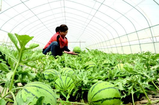 酒泉金塔县集中攻坚戈壁农业 充分发挥示范园区引领带动作用(图)