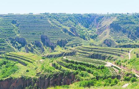 庆阳市正宁县持续加大植绿步伐 建成了多处苗林示范工程