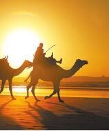 曹宗让:讲述骆驼客的故事