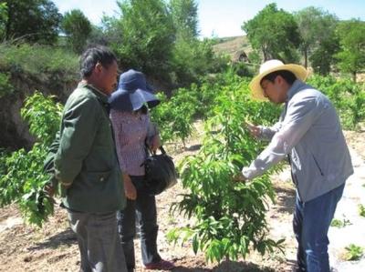 兰州市榆中县孟家山干旱山地经济林生态经济效益初现