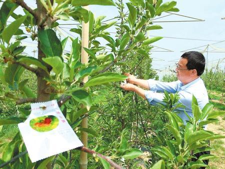 平凉市静宁县大力开展苹果病虫害预测预报及防控体系建设