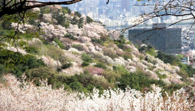 韩国受邀作为主宾国参会